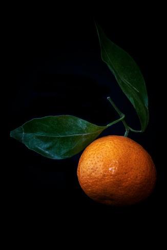 Satsuma Orange Study - 2