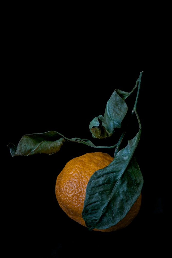 Satsuma Orange Study - 3