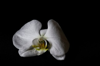 Orchid Study - 44