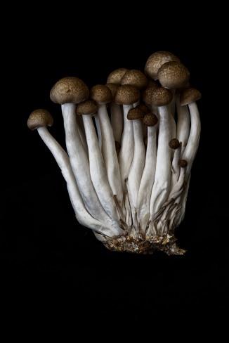 Consider The Mushroom - 1