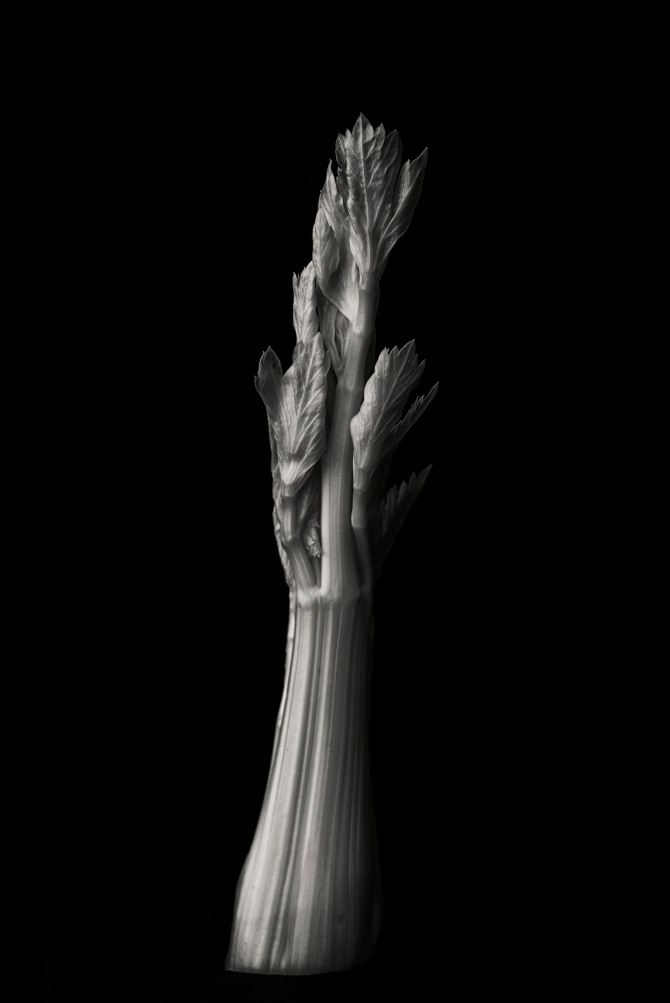Consider The Celery - 1