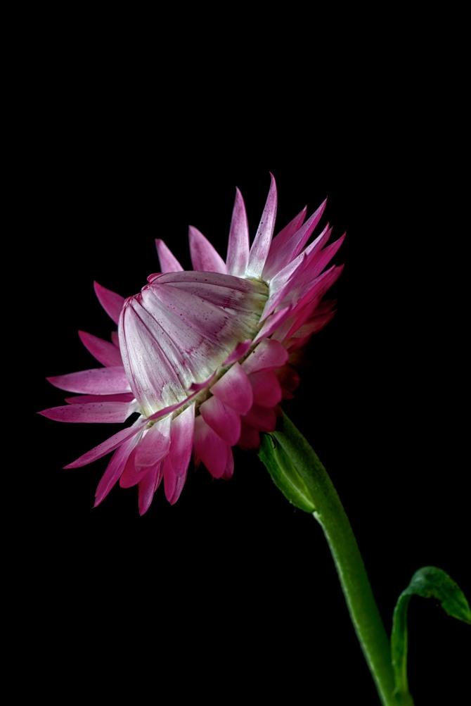Bloom 204