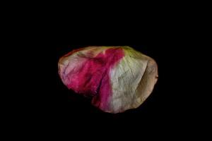 Rose Petals = 6