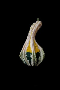 Consider The Gourd - 1