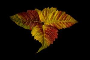 Autumn - 2