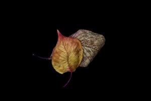 Autumn - 3