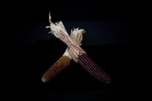 Consider The Corn - 4